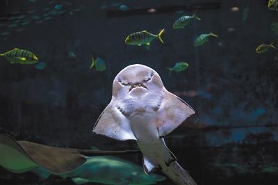 生氣的魚兒