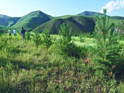 10万亩水源保护林植绿京北