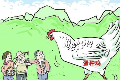 世界最大单体蛋种鸡项目落户河北行唐