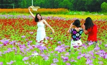 汤河畔新增500亩景观花田