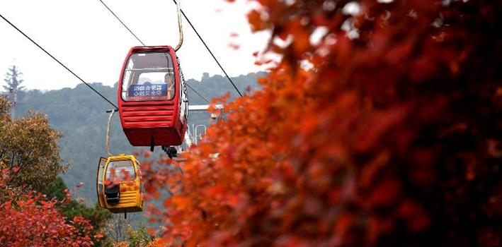 北京:氣溫降低 紅葉進入最佳觀賞期