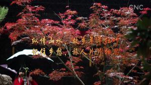 紅葉季 中國美