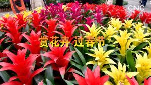賞花卉 過春節