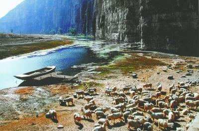 退羊8000只 增綠8000畝