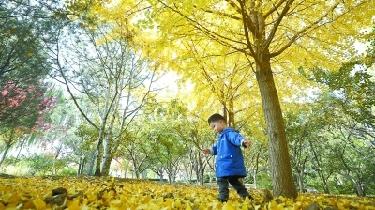 玉淵潭公園推出7大賞秋景點