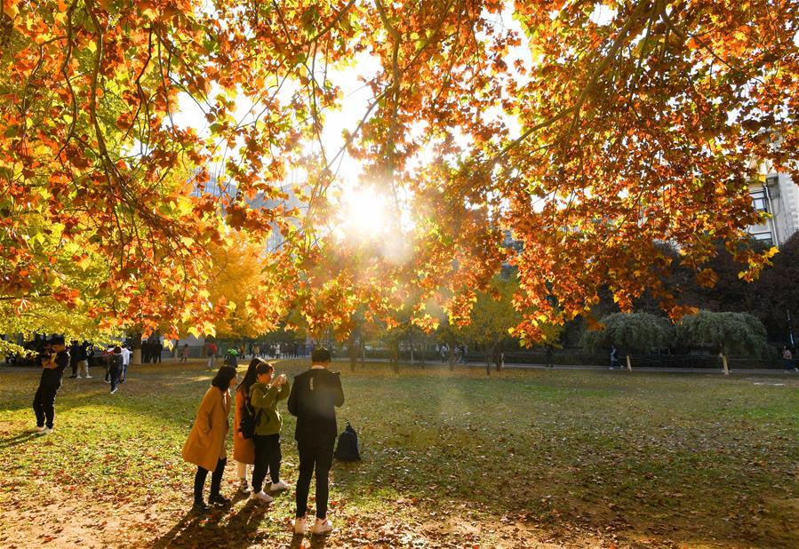 北京:校園秋色如畫