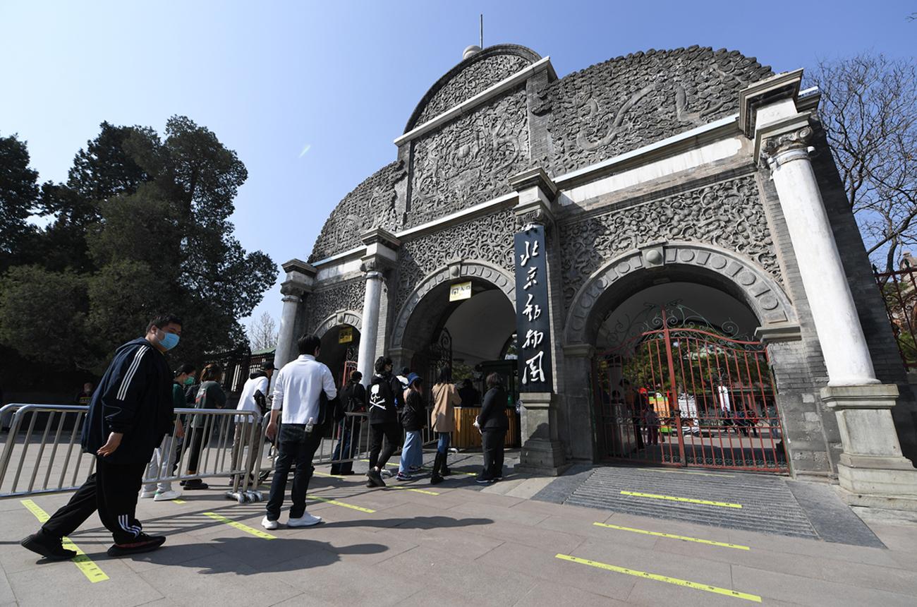 北京動物園恢復開園