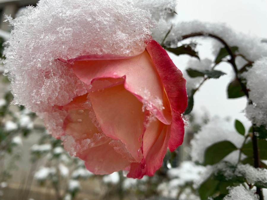 北京下雪了
